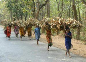 आदिवासी आणि त्यांची वनसंपदा