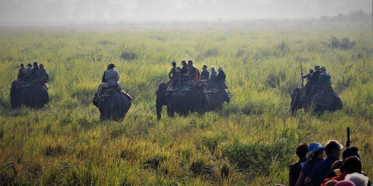 आदिवासी हक्कांना वंचित ठेवणारे वनसंवर्धन