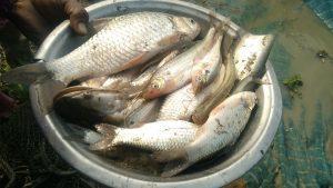 नालाकृती सरोवरातील खोल पाण्यात ताज्या माशांची मासेमारी स्त्रोत- लेखक