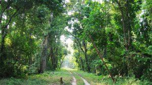ओडिशा मधील एक जंगल