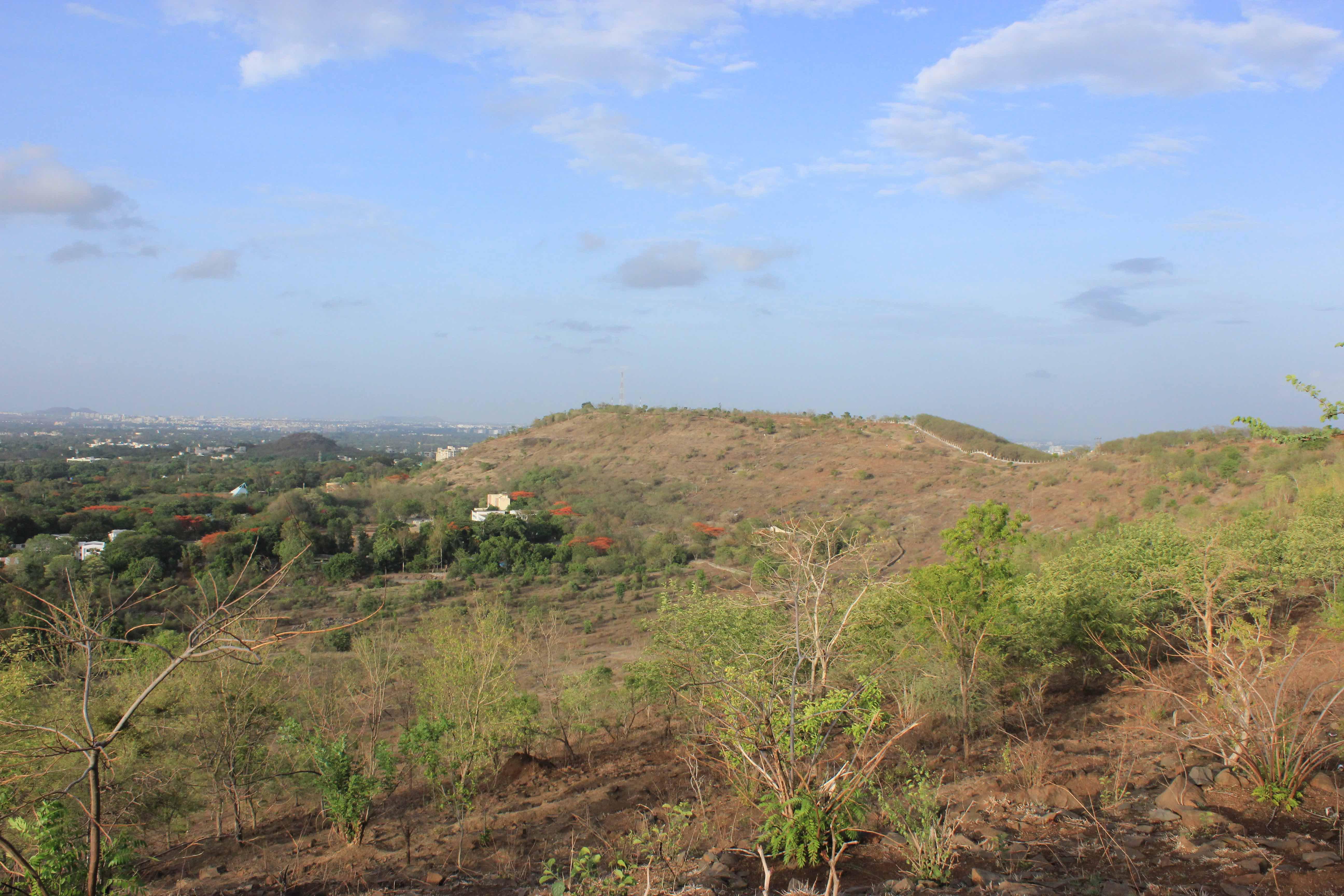 मोकळे गवताळ प्रदेश की गर्द झाडी – पुण्यातल्या टेकड्यांचे भविष्य काय?