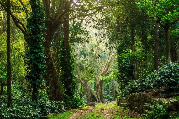 वनक्षेत्राखालील जमीन ठरवण्याचा अधिकार राज्याला