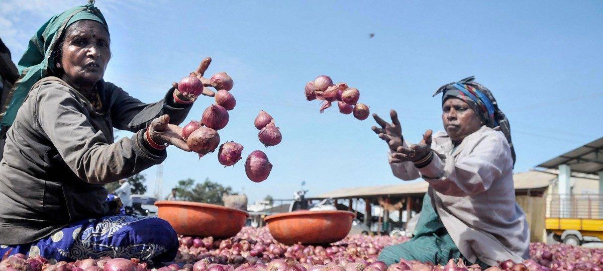 कांद्याचे संकट – सरकारकडे उपाययोजना नाहीत