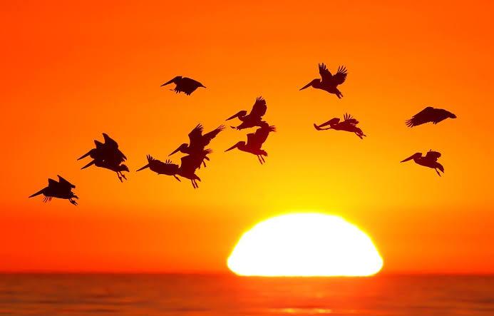 पक्ष्यांच्या प्रजाती लुप्त होण्याचा दर पूर्वीपेक्षा शंभर पट