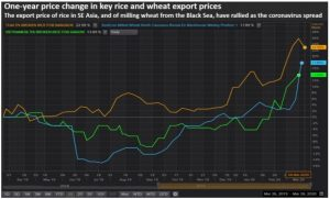 Figure 2 Year-on-year change in the export prices of rice and wheat, April 2019 to March 2020 (Source: Reuters.)