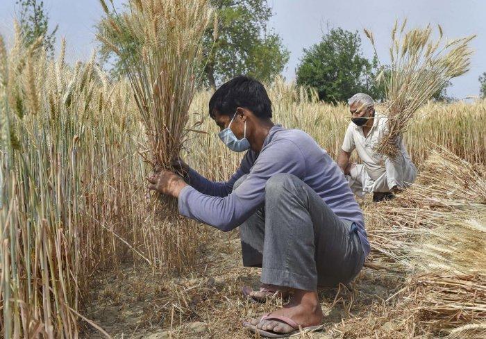 पीएम किसान पॅकेज : दीड कोटी शेतकरी अद्याप वंचित