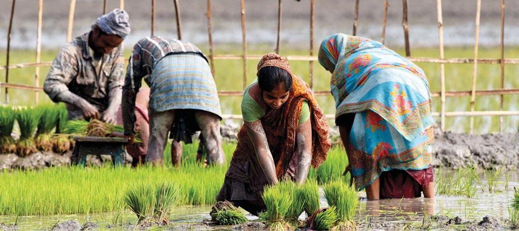 प्रलंबित दाव्यांच्या दंडात्मक व्याजापासून शेतकरी वंचित