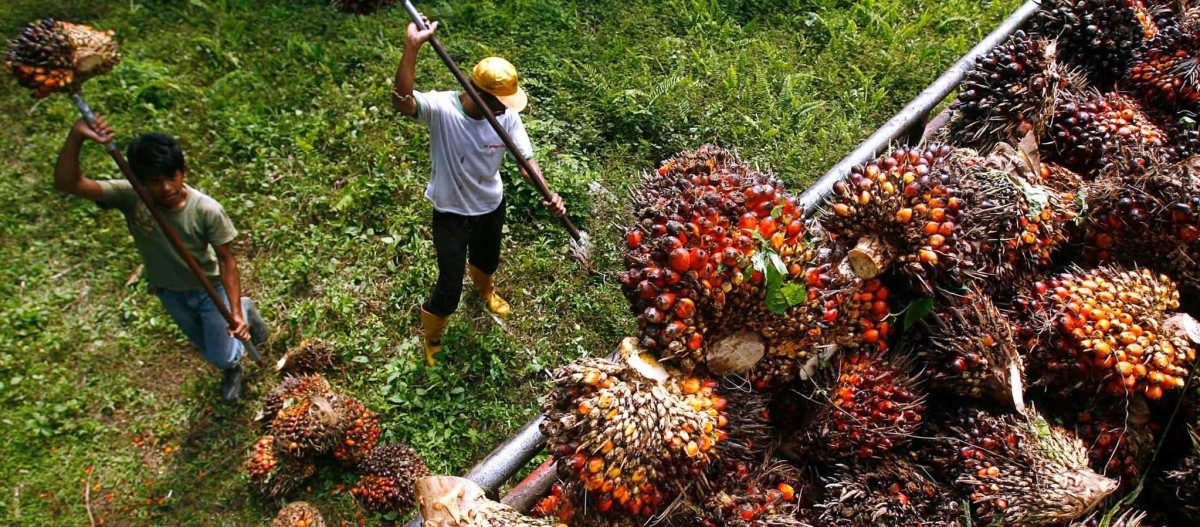 उत्पादन कमी झाल्याने खाद्य तेलांच्या दरात वाढ