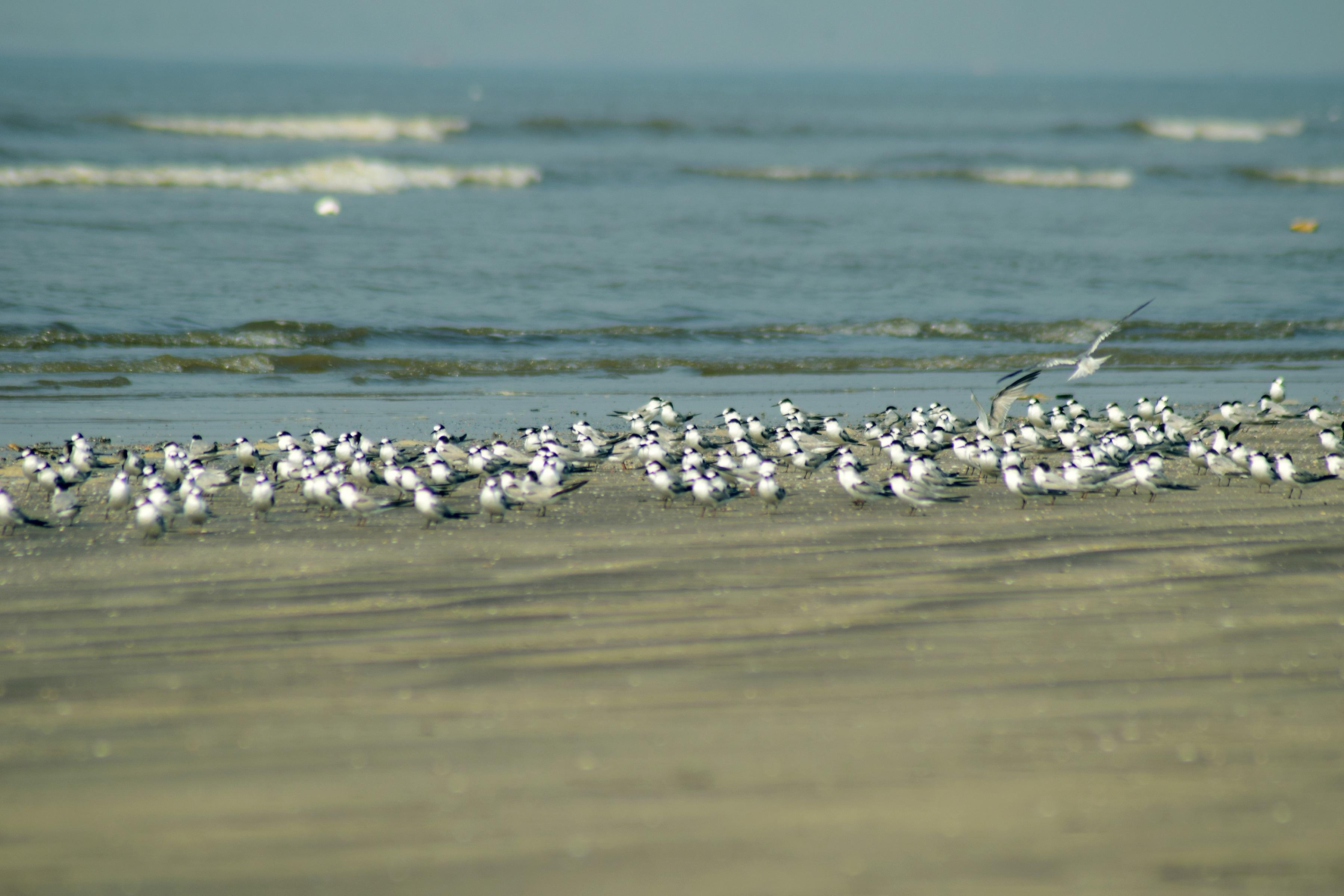 समुद्रकिनाऱ्याचे रंग अन् गाणारं माळरान