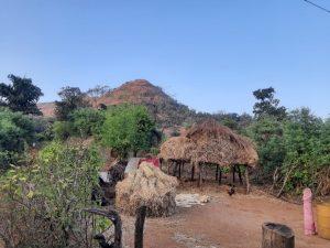 """""""टाटा लँड्स""""वरील एका गावातील शेती. फोटो: नंदिनी ओझा"""