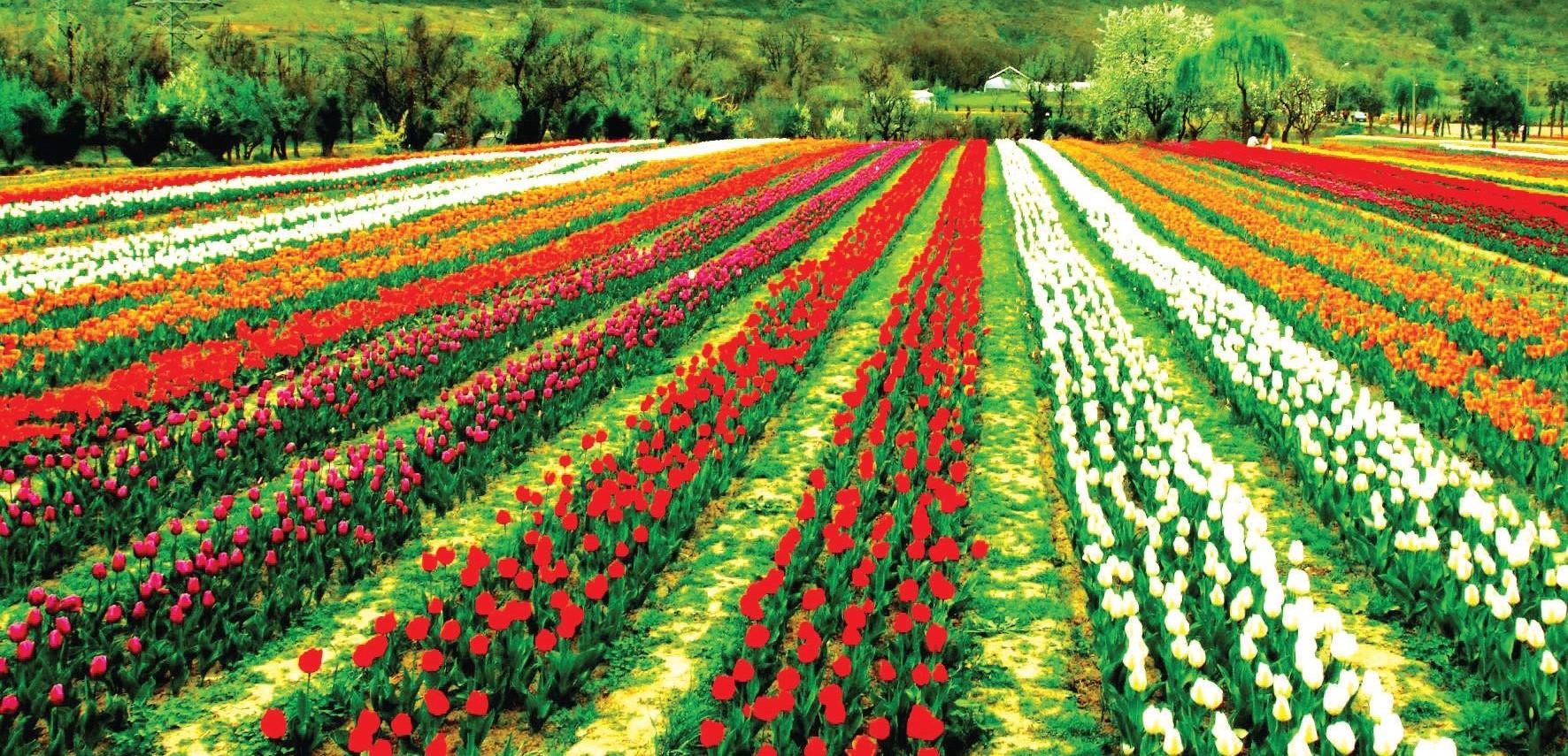 काश्मीर पर्यटकांसाठी खुले