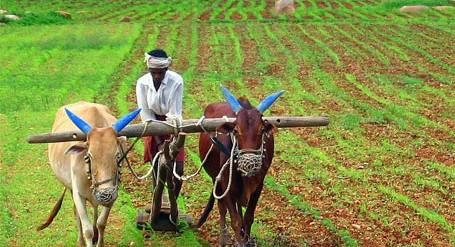 कोविडमुळे कोलमडलेले शेतकऱ्यांचे आर्थिक बजेट
