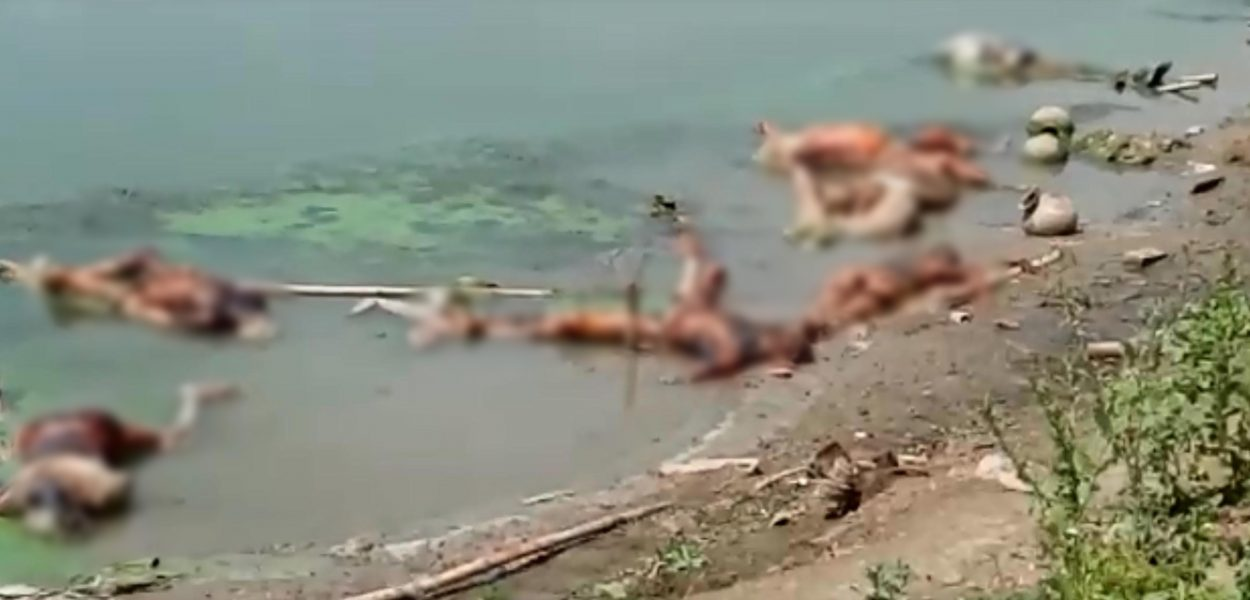 बिहार-उ. प्रदेश सीमेवर गंगेत ७१ मृतदेह आढळले