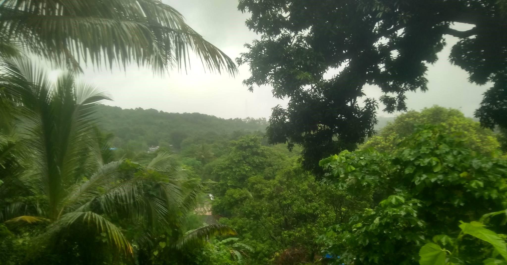 मुंबईत मधोमध विस्तीर्ण जंगलाचा निर्णय