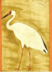 बादशाह जहांगीरच्या दरबारातील कुशल चित्रकार उस्ताद मन्सूर यांनी काढलेलं सायबेरियन क्रौंचचं चित्र. 'स्टडी ऑफ अ व्हाईट क्रेन'